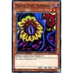 Magical Plant Mandragola - Common (1st Edition) - Speed Duel Scars of Battle - Yu-Gi-Oh! - Big Orbit Cards